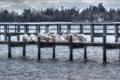 White Pelicans and Piers-Robert Goldwitz-Photographic Print