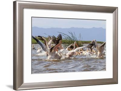 White Pelicans. Lake Chamo. Ethiopia, Africa-Tom Norring-Framed Photographic Print