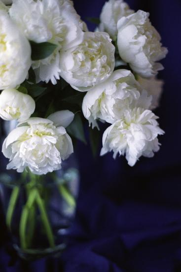 White Peonies in a Vase-Anna Miller-Photographic Print