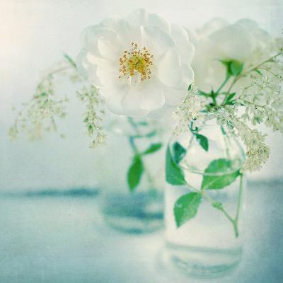 White Peonies-Sarah Gardner-Photographic Print
