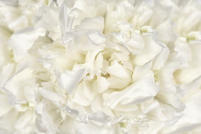 https://imgc.artprintimages.com/img/print/white-peony-flower_u-l-q12u2wy0.jpg?p=0