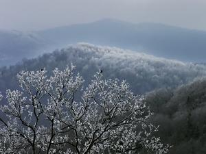 Birds Rest on Rime Ice-Tipped Tree Branches Overlooking the Mountains by White & Petteway