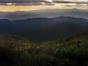 Evergreen Trees Backlit by the Sunset over the Blue Ridge Mountains by White & Petteway