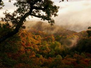 Mist Enshrouds Mountains Below Which are Rich with Autumn Color by White & Petteway