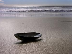Mussel Shell Holding Water Near Surfs Edge on a Beach by White & Petteway