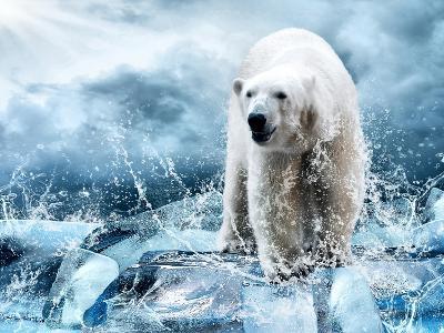 White Polar Bear Hunter On The Ice In Water Drops-yuran-78-Photographic Print