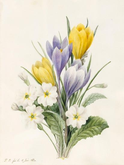 White Primroses and Early Hybrid Crocuses, 1830-Louise D'Orleans-Giclee Print