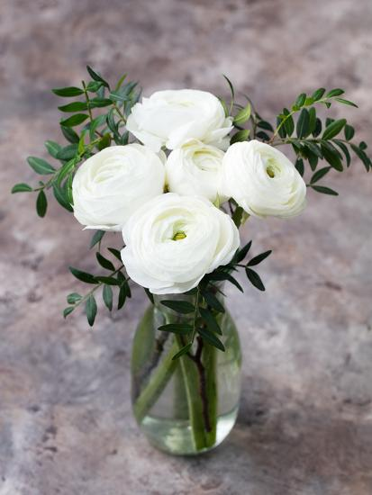 White Ranunculus Flowers In Vase Grey Background Photographic Print
