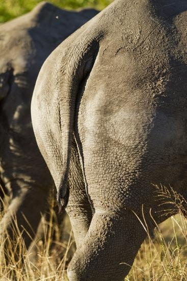 White Rhino Tail, Sabi Sabi Reserve, South Africa-Paul Souders-Photographic Print