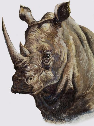 White Rhinoceros, 1980-English School-Giclee Print
