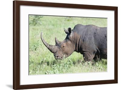 White Rhinoceros, Kenya-Martin Zwick-Framed Photographic Print