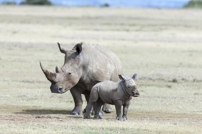 White Rhinoceros Mother with Calf, Kenya-Martin Zwick-Photographic Print