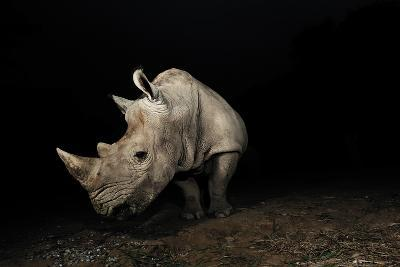 White Rhinoceros-Signature Message-Photographic Print
