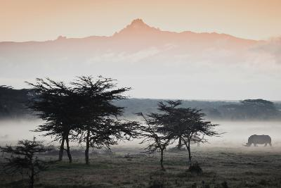 White Rhinos Appear Out of the Mist in Front of Mount Kenya-Robin Moore-Photographic Print