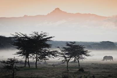 https://imgc.artprintimages.com/img/print/white-rhinos-appear-out-of-the-mist-in-front-of-mount-kenya_u-l-pil88u0.jpg?p=0