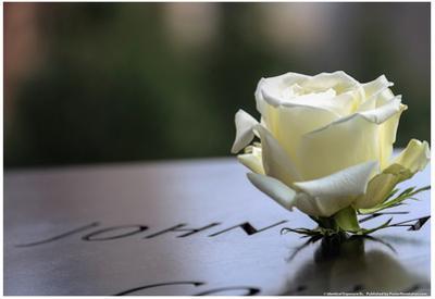 White Rose at September 11 Memorial
