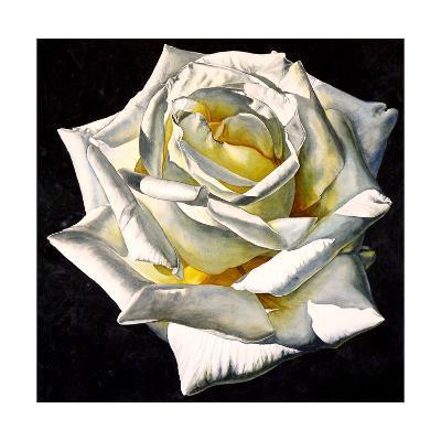 White Rose- Yellow Center-Laurin McCracken-Giclee Print