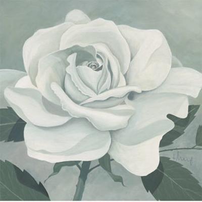 White Rose-Franz Heigl-Art Print