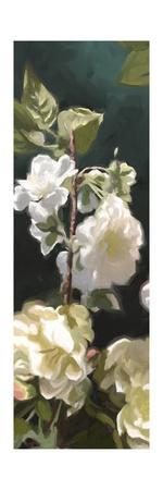 https://imgc.artprintimages.com/img/print/white-roses-iv_u-l-q1bgvlp0.jpg?p=0