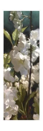 https://imgc.artprintimages.com/img/print/white-roses-v_u-l-q1bgxuu0.jpg?p=0