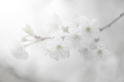 https://imgc.artprintimages.com/img/print/white-spirit-and-positive-sensations_u-l-q1gdzij0.jpg?p=0