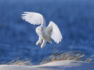 White Spirit Demon-Wei Tang-Photographic Print