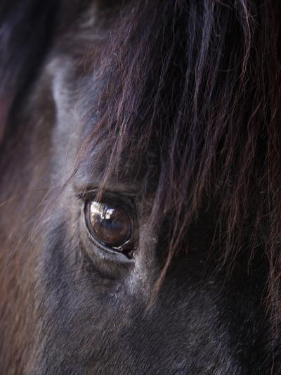 White Stallion Dude Ranch, Tucson, Arizona, USA-Julian McRoberts-Photographic Print