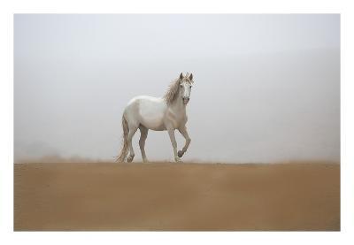 White Stallion-Sally Linden-Art Print