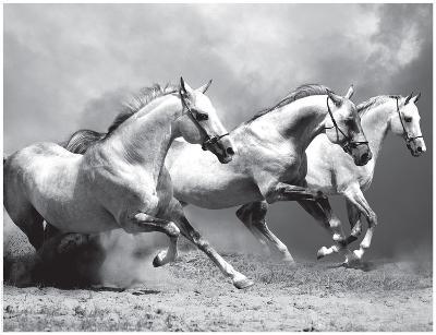 White Stallions II--Art Print