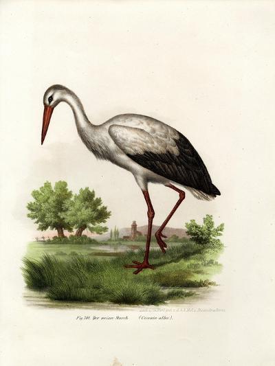 White Stork, 1864--Giclee Print