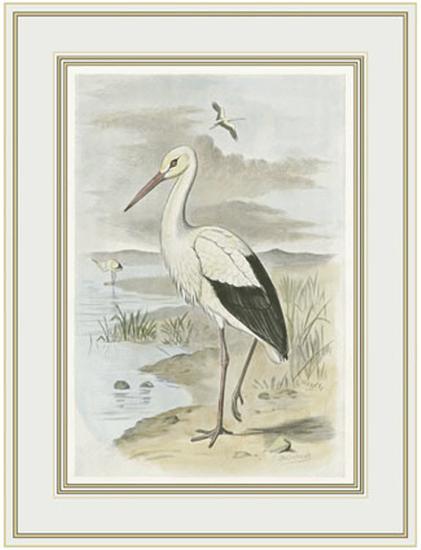 White Stork--Art Print
