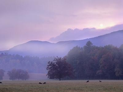 White-Tailed Deer at Cades Cove, Great Smoky Mountains National Park, Tennessee, Usa-Tim Fitzharris-Photographic Print