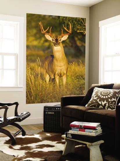 White-Tailed Deer in Autumn, South Texas, USA-Larry Ditto-Wall Mural