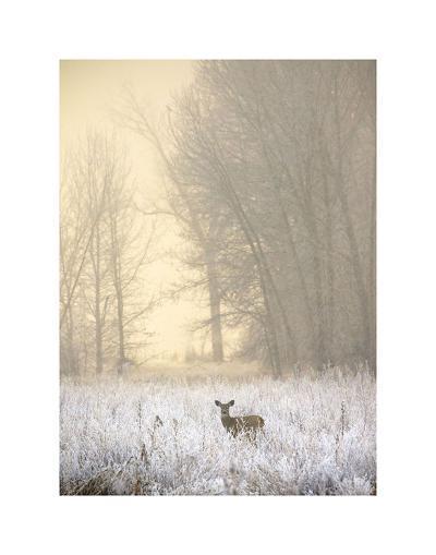 White-tailed Deer in Fog-Jason Savage-Art Print