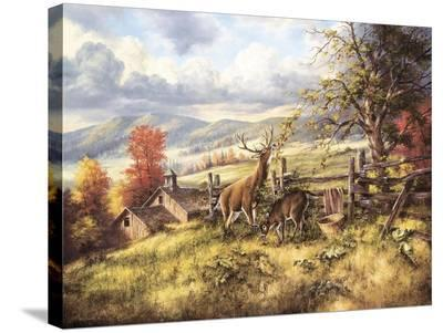 White Tailed Deer-Rudi Reichardt-Stretched Canvas Print