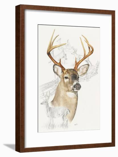 White Tailed Deer-Barbara Keith-Framed Giclee Print