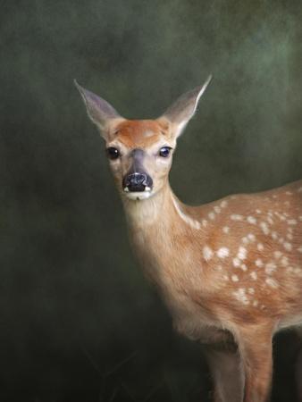https://imgc.artprintimages.com/img/print/white-tailed-fawn-portrait_u-l-pu0p0u0.jpg?p=0