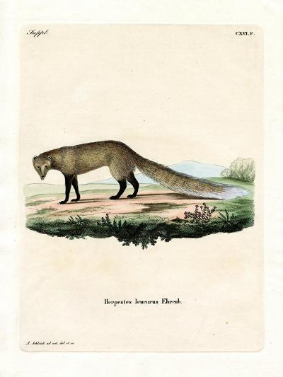 White-Tailed Mongoose--Giclee Print