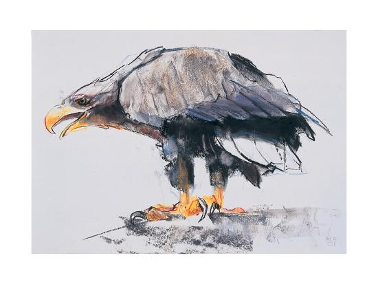 White Tailed Sea Eagle, 2001-Mark Adlington-Giclee Print
