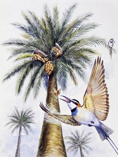 White-Throated Bee-Eater (Merops Albicollis)--Giclee Print