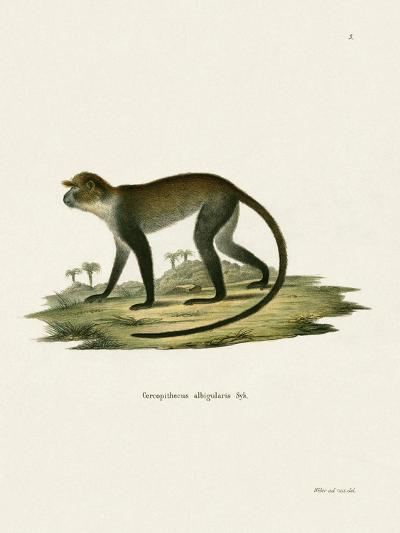 White-Throated Monkey--Giclee Print
