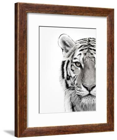 White Tiger-Design Fabrikken-Framed Premium Photographic Print