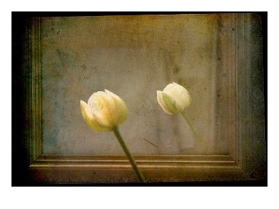 White Tulip against Framed Mirror-Mia Friedrich-Photographic Print