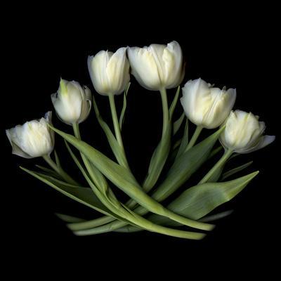 https://imgc.artprintimages.com/img/print/white-tulips_u-l-q1aa2ip0.jpg?p=0