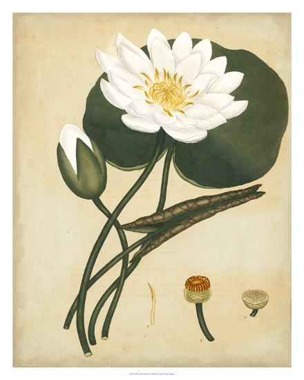 White Water Lily-Henry Andrews-Giclee Print