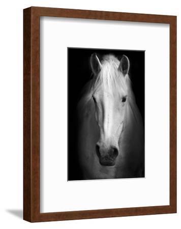 Whitemare--Framed Art Print