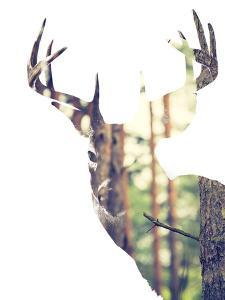 Whitetail Buck in the forest or Vice Versa