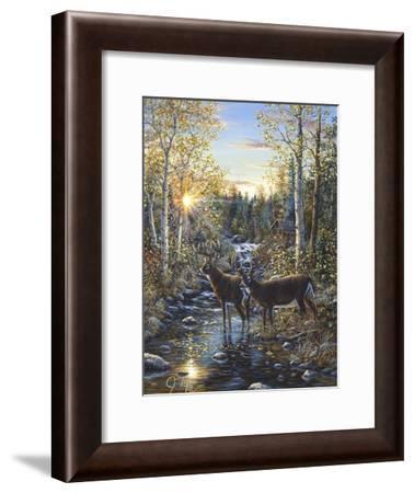 Whitetail Deer-Jeff Tift-Framed Giclee Print