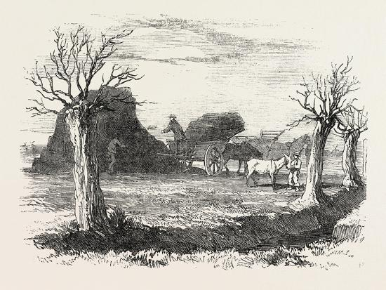 Whittlesea Mere, Carting Peat from the Stack, UK, 1851--Giclee Print