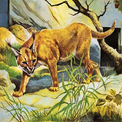 Who's Who in the Zoo: the King's Pet Cat-G^ W Backhouse-Giclee Print
